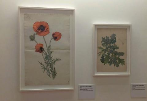 Obras Botanica e Estudos de Hilma af Klint (credito Bianca Matz)
