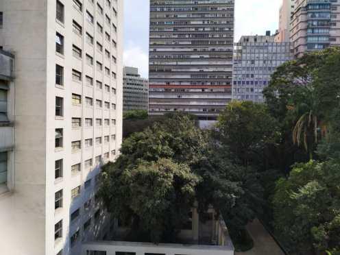 Castanheira, árvore preferida do arquiteto Jacques Pilon responsável pela construção (crédito Verônica Andrade e Gabriela Barbosa)
